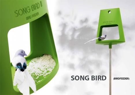 song_bird.jpg
